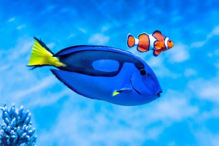 Nemo and Dory at the Monterey Bay Aquarium