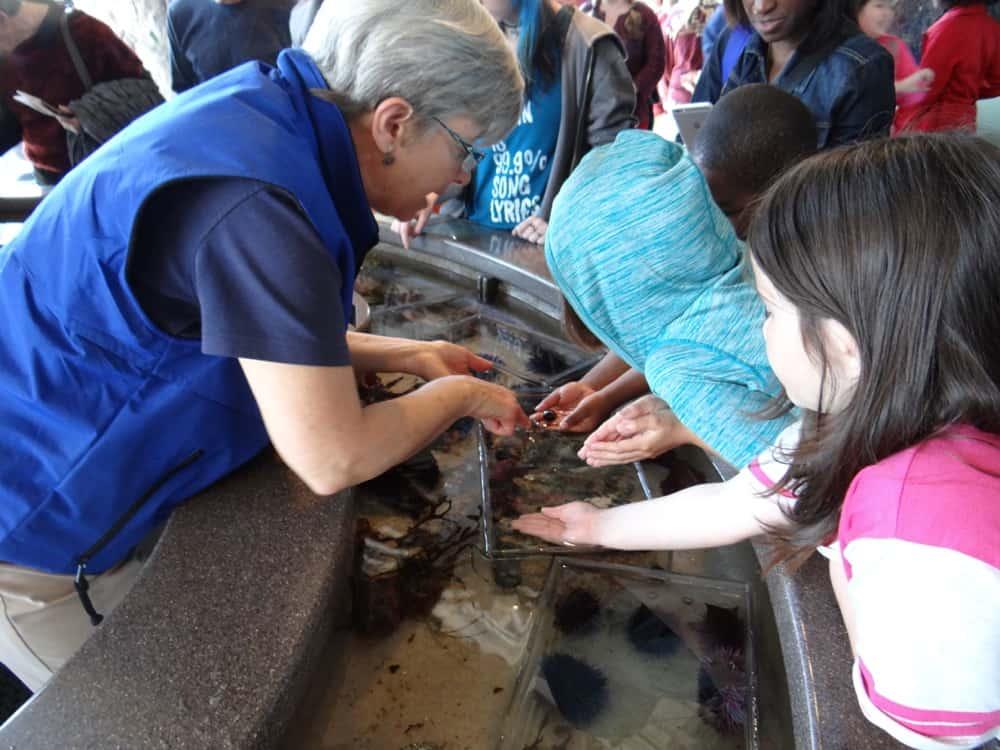 Monterey Bay Aquarium Touch Pools