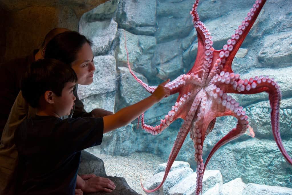 Tentacles Exhibit at the Monterey Bay Aquarium