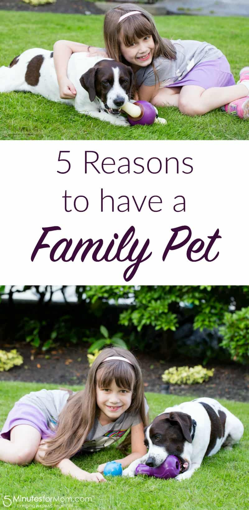 5 Reasons to Have a Family Pet