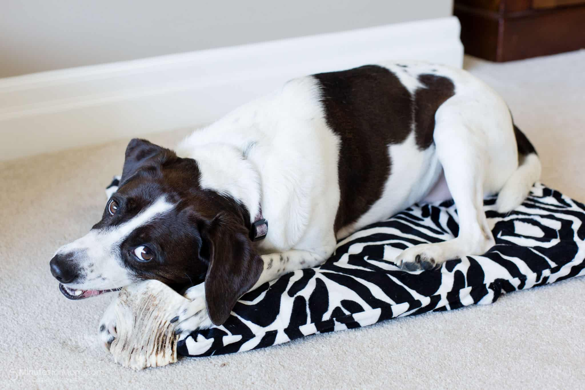 Two Diy Dog Beds With Video Tutorial 5 Minutes For Mom