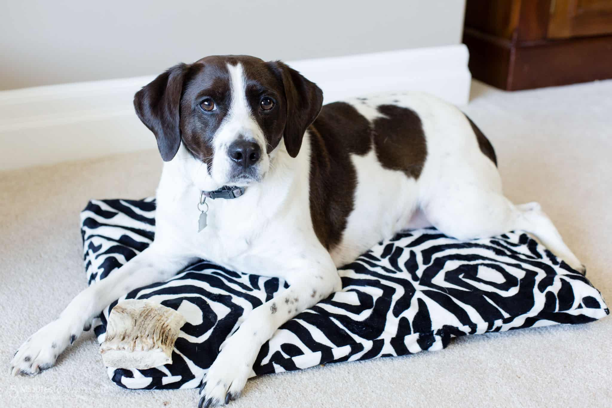 Pillowcase DIY dog bed