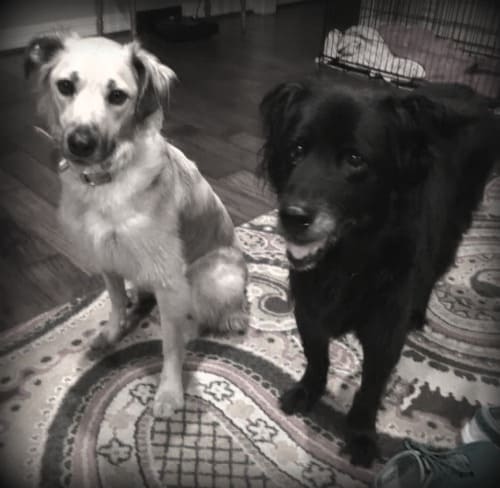 Mabel and Shadow BW