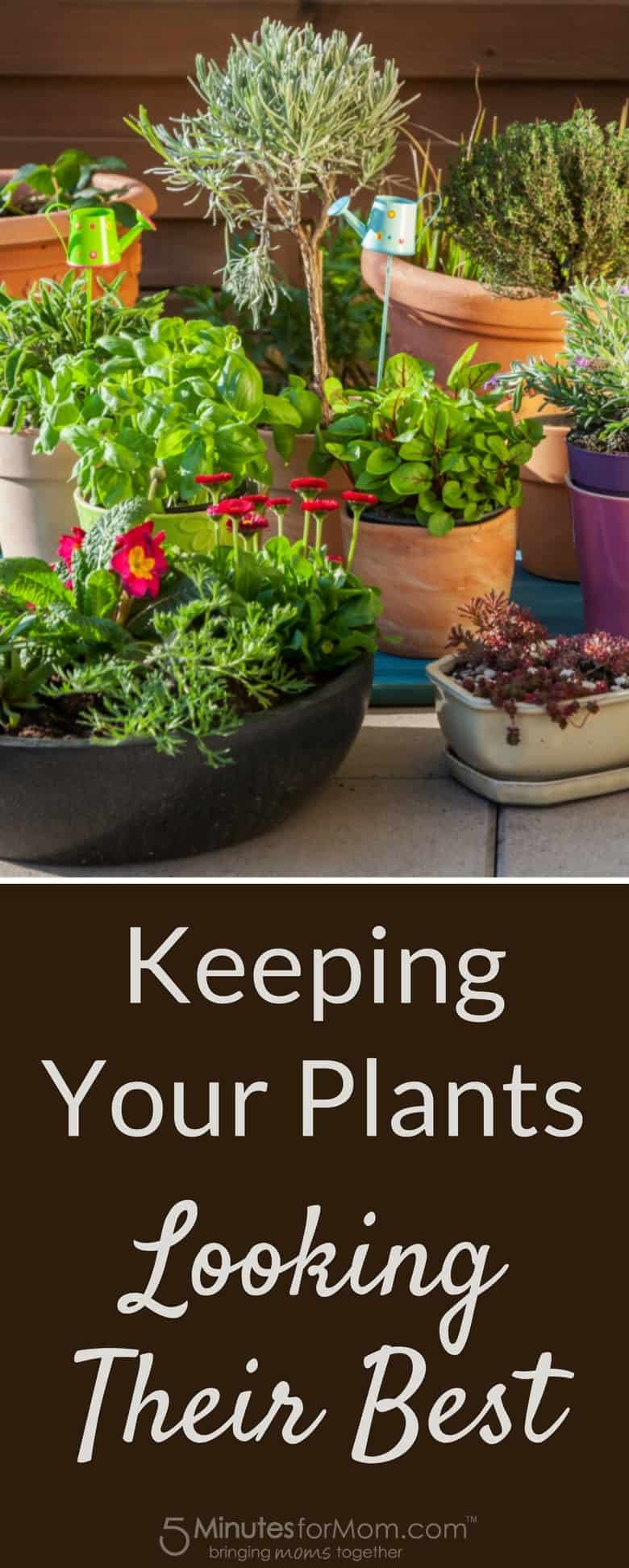 Container Gardening - Keeping Your Plants Looking Their Best