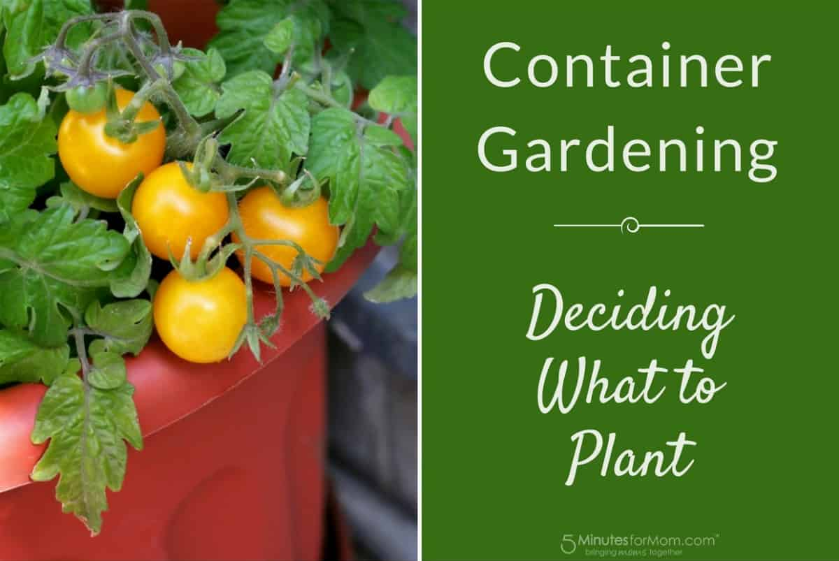 Container Gardening - Deciding What To Plant