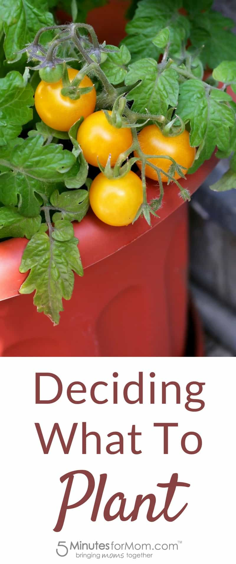 Deciding what to plant when container gardening