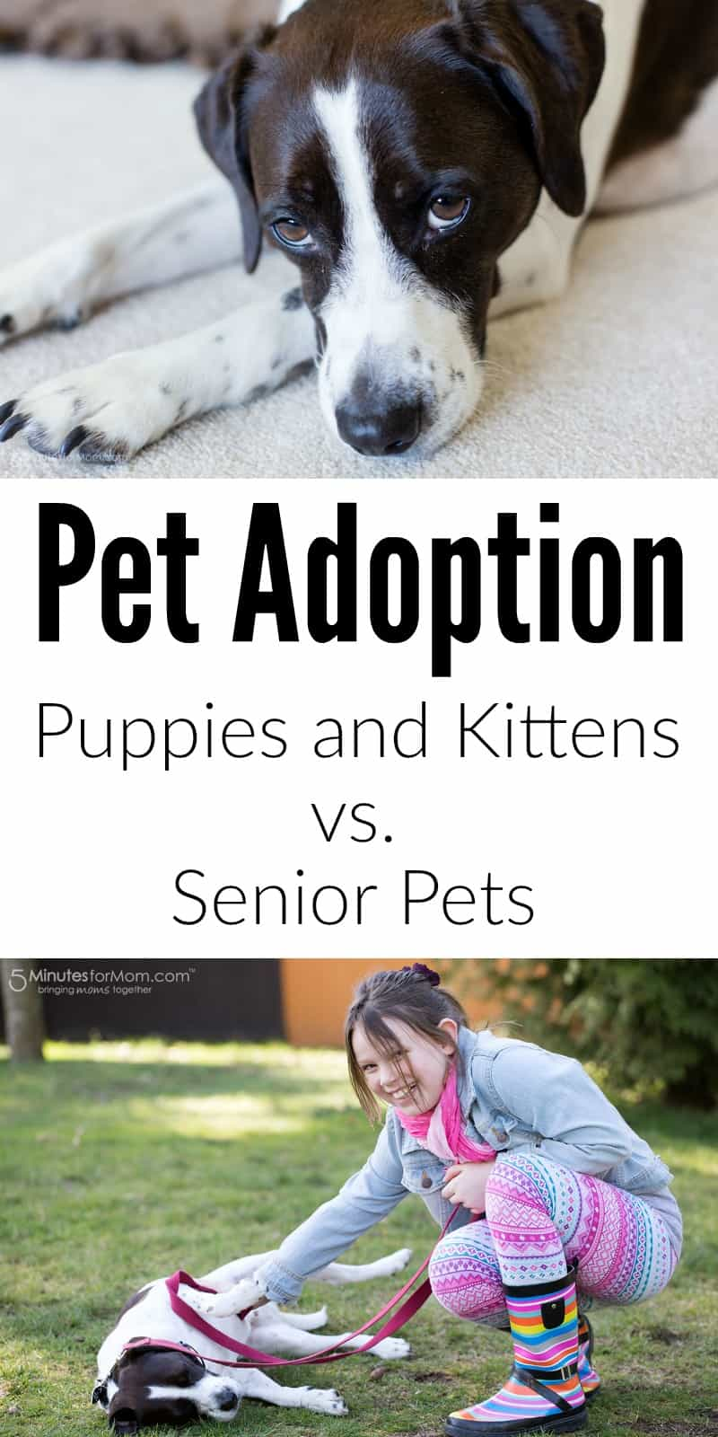 Pet Adoption - Puppies and Kittens vs. Senior Pets