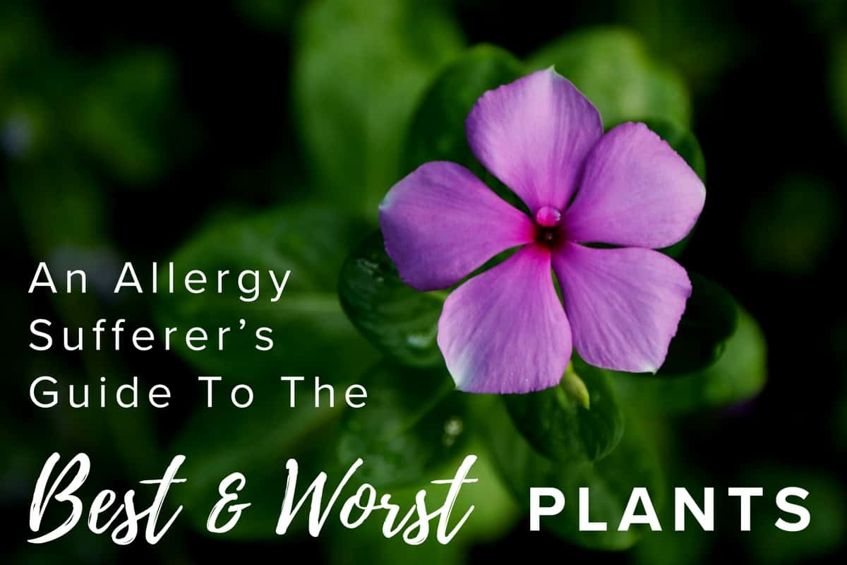 An Allergy Sufferer's Guide to the Best and Worst Plants