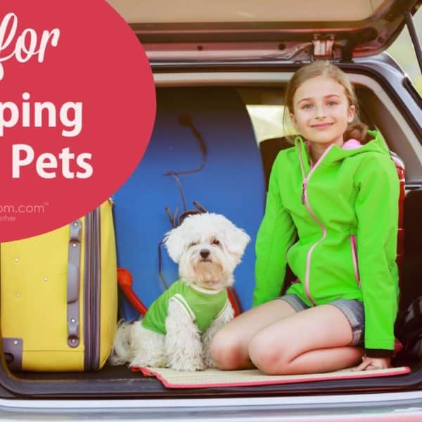 Tips for Camping With Pets