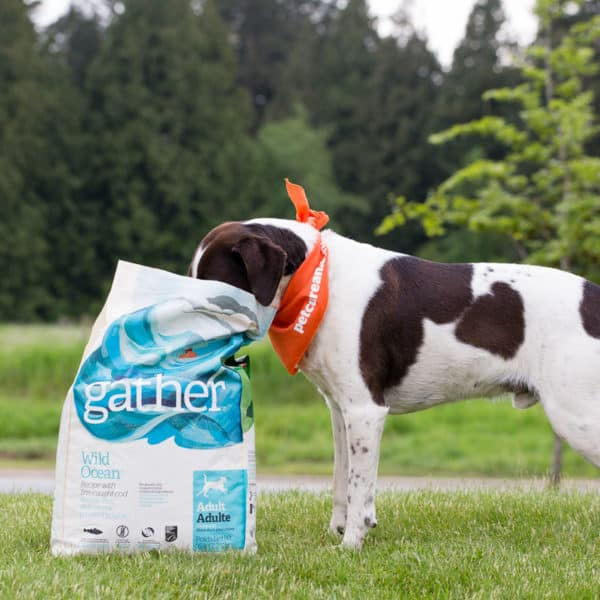 Is Your Pets' Food Ethically Sourced? #GATHERtogether