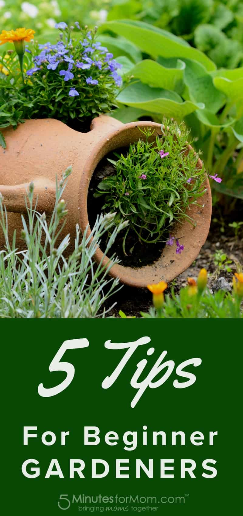 5 Tips for Beginner Gardeners