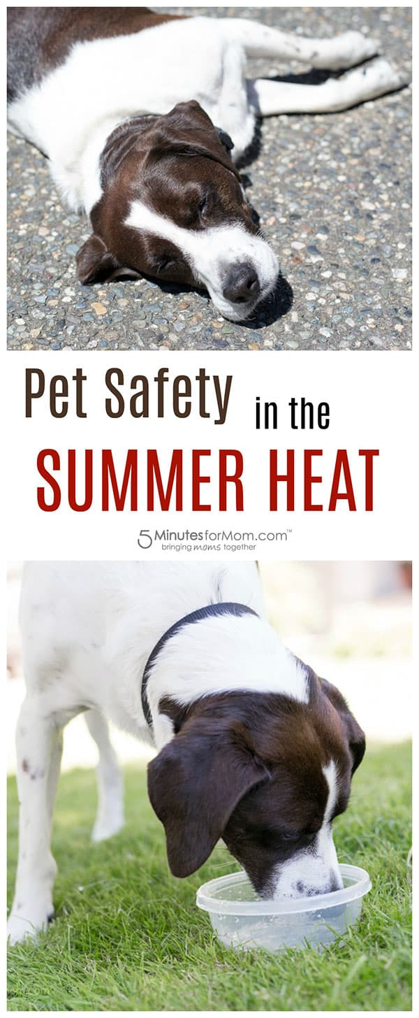 Pet Safety in Summer Heat