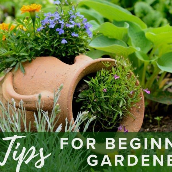 5 Tips for Beginner Gardeners