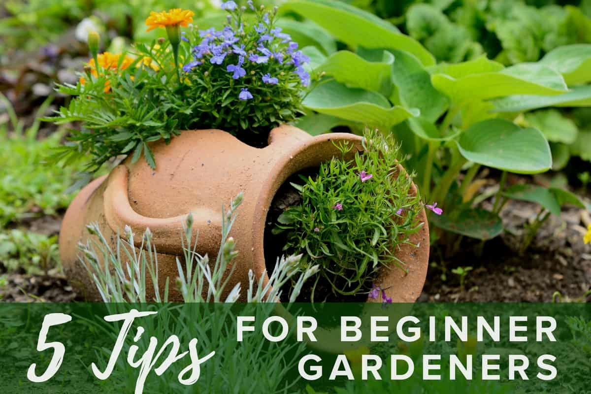 Tips for Beginner Gardeners