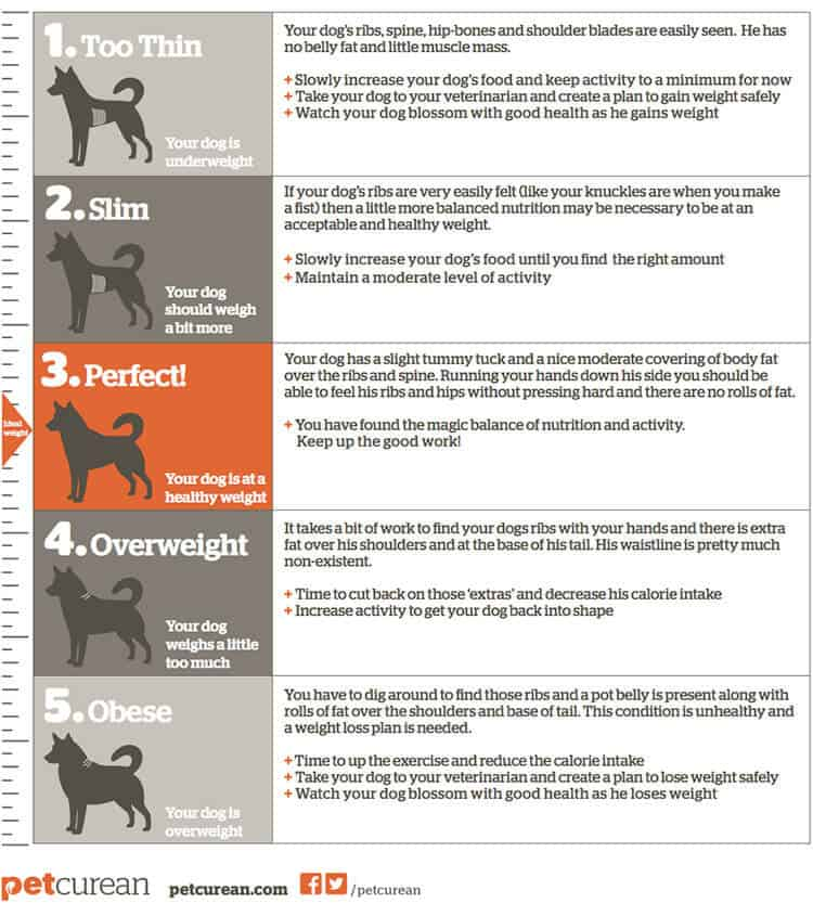 Body Score Chart for Dogs