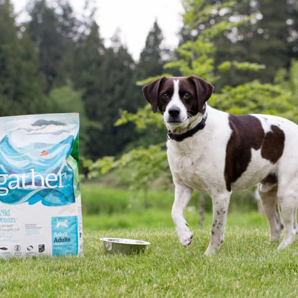 Understanding Nutrition Labels on Pet Food