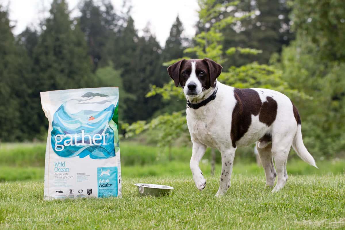 Gather Petcurean Pet Food