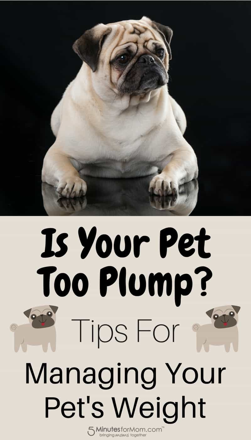 Is Your Pet Too Plump - Tips For Managing Your Pet's Weight