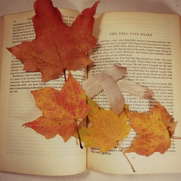 Autumn- A Perfect Time to Tackle Your TBR List