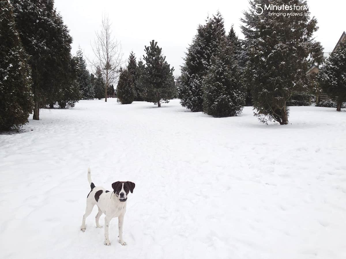 How to protect your pet from winter s chill 5 minutes for mom howldb - Keeping outdoor dog happy winter ...