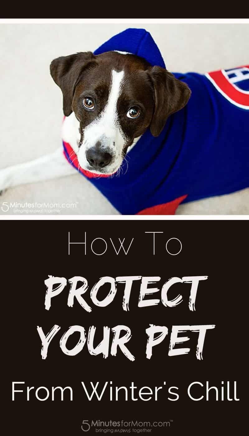 How To Protect Your Pet from Winter Weather