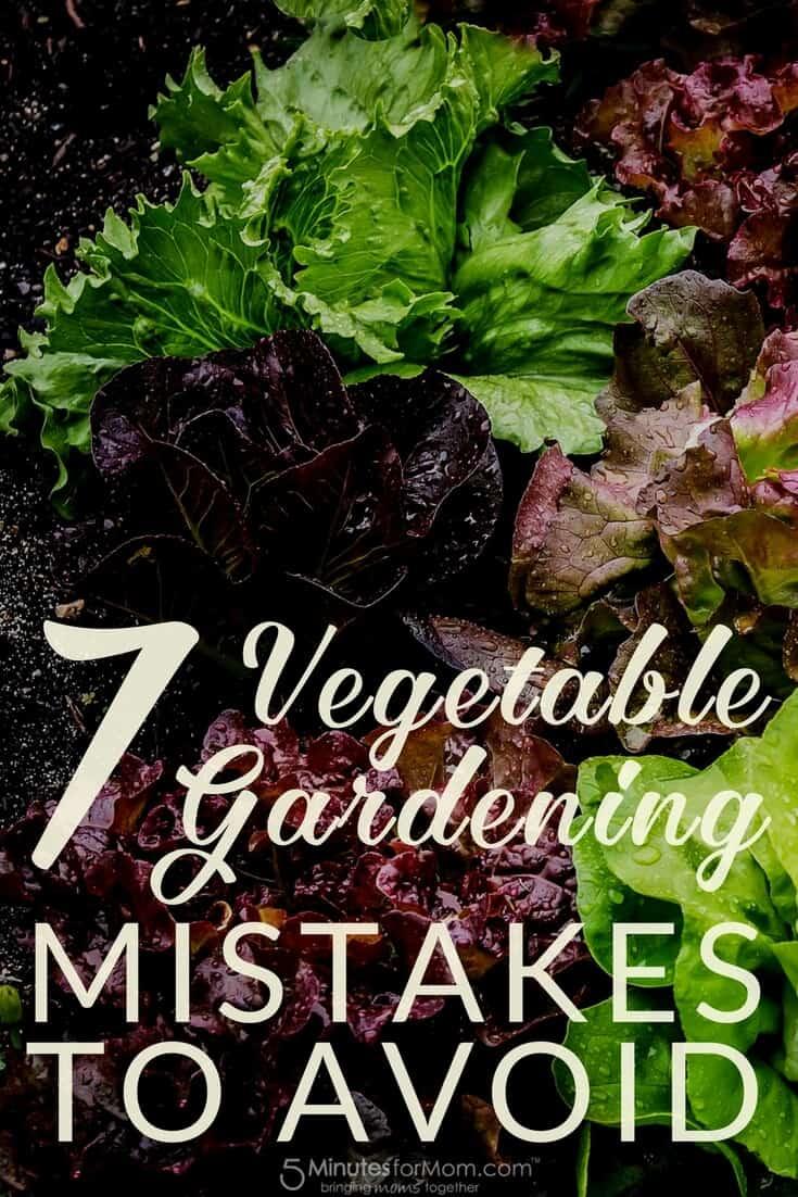 7 Vegetable Gardening Mistakes to Avoid