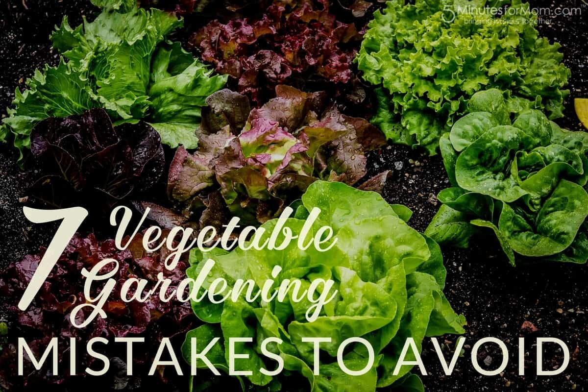 7 Vegetable Gardening Mistakes to Avoid