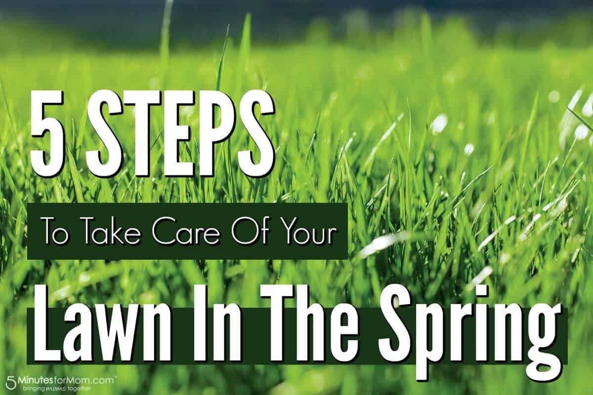 5 Steps To Take Care Of Your Lawn In The Spring Minutes