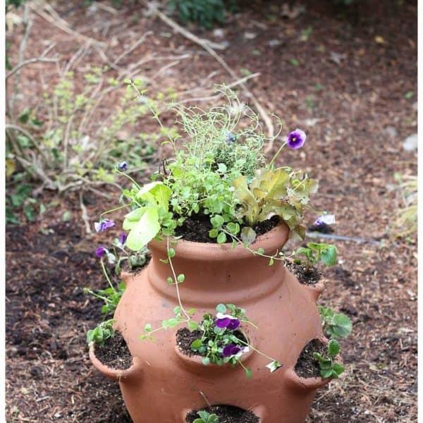 How To Make An Edible Miniature Garden – Fabulous DIY Mother's Day Gift