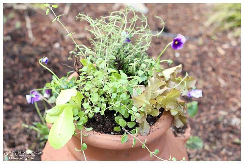 DIY Miniature Garden