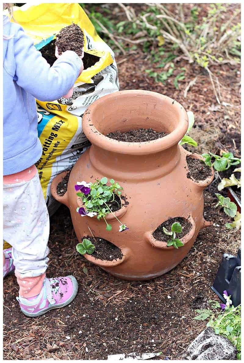 Planting miniature garden