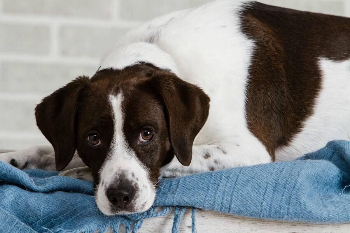 Adopting Shelter Dogs