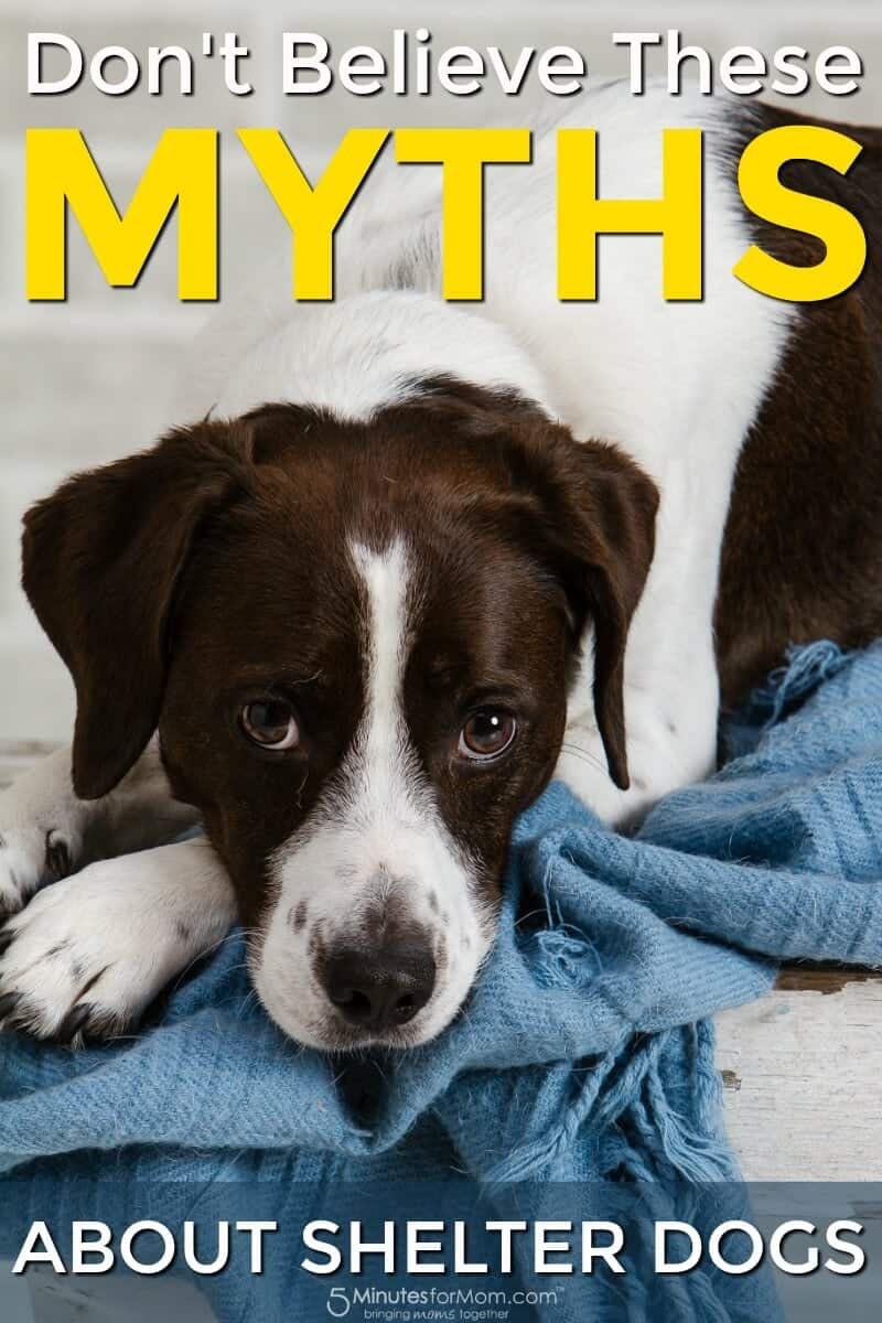 Don't Believe These Myths About Shelter Dogs