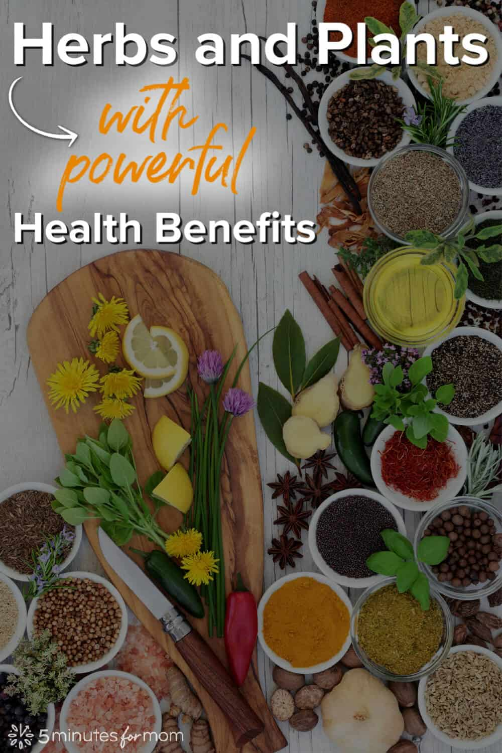 Medicinal Plants and Herbs with Powerful Health Benefits