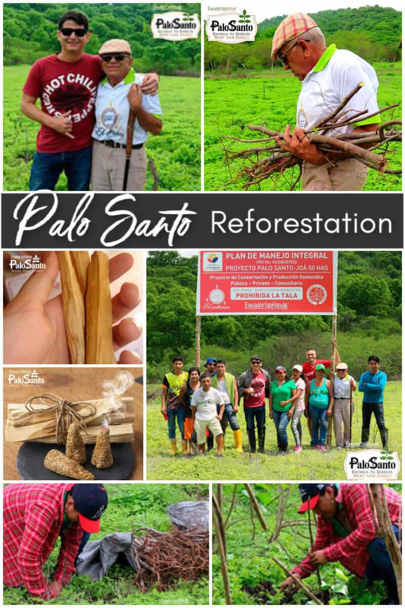 Palo Santo Reforestation in Ecuador