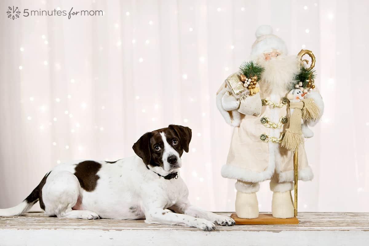 AJ Beagle Mix with Santa Statue
