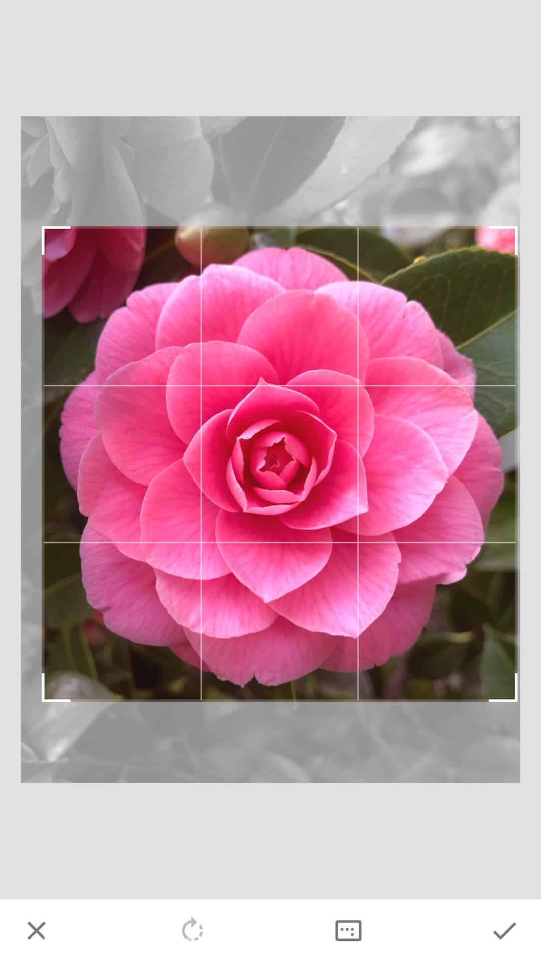 Crop image 1x1 on Snapseed app