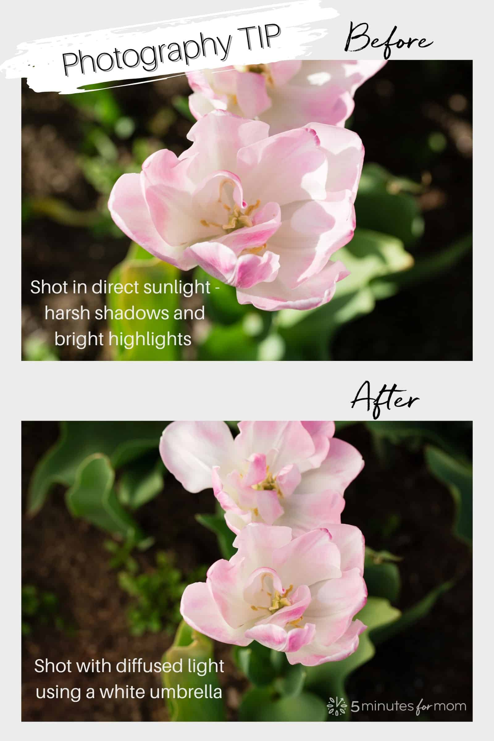 Before and after photo examples of photographing using diffused light through a white umbrella